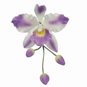 2110000034061_980_1_pme_ausstecher_cattleya_orchidee_a15d485a.jpg